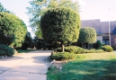 Trees - Shrubs - Hedges - Topiary - Giant Shrubs